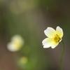 雨の植物園 黄色②