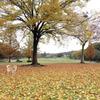 秋色の保護色