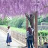 藤 名城公園