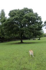 コロン君と大きな木