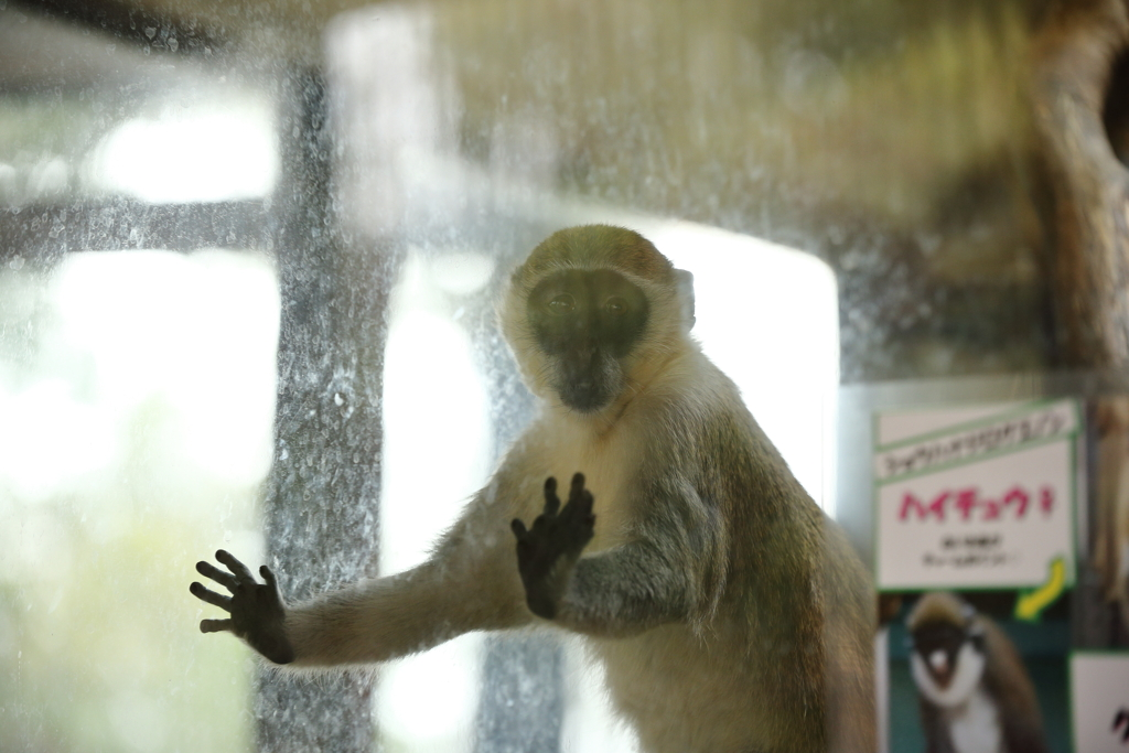 モンキーセンター ご支猿のお願い