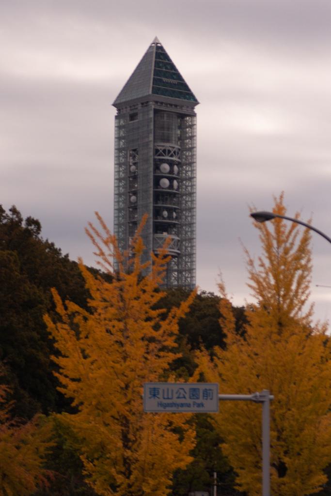 東山タワーと銀杏