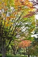 秋色木もれ日
