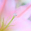 花(鼻)高々