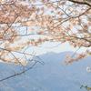 桜と福智山