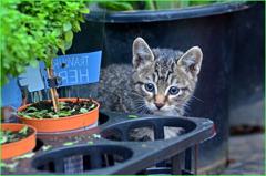 花園の猫_4967
