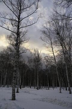 冬の夕日は雲の向こうに