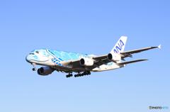 「良い空~」Flying Honu  A380-841 海亀 来た~