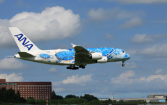 [青い空] ANA  Flying Honu A380-841 到着