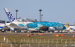 「すかい」Flying Honu A380-841 JA382A