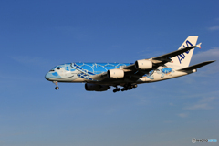 「あおぞら」 Flying Honu  A380-841 到着です