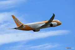 ☀「青い空」が一番 scoot 787-8 9V-OFD 飛ぶ