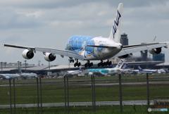 「晴れ」 Flying Honu A380-841  Landing