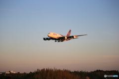 「青い日」Thai A380-841 HS-TUD Landing