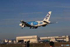 「青い日」Flying Honu  A380-841   Landing Wホヌ