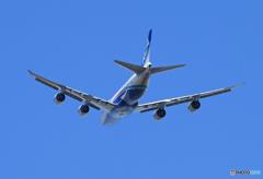 「ブルー」 NCA 747-8KZF JA14KZ 出発です
