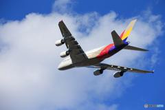 「青が好き」 Asiana A380-841 HL-7640 Takeoff