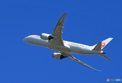 「スカイ」JAL 787-8 JA842J  Takeoff