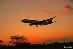シルエット・カンタス/Qantas 着陸します