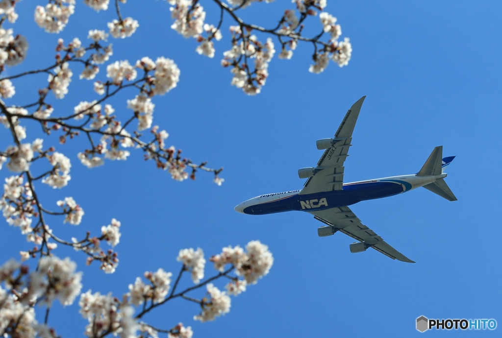 sakuraの山 桜咲く [日本のジャンボ機] 飛ぶ