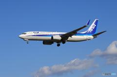 「群青色」 ANA 737-881 JA56AN Landing
