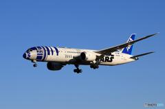 「群青」 STAR WARS 787-8 到着です