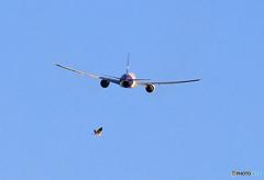 「SKY」鳥と一緒に飛ぶ JET?