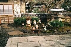 念仏寺の狸たち