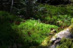 森の中8256