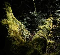 8287森の中