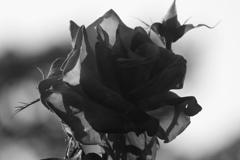 黒衣の麗人