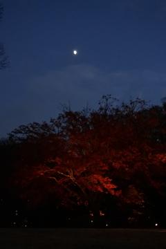 六義園ライトアップ~ 月