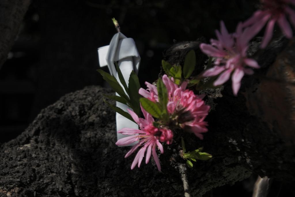 花に結ぶ想い
