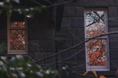 旧古河庭園~旧古河邸 窓