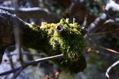 生き物みたいな苔