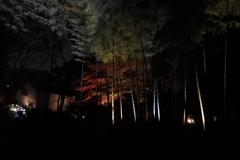 六義園ライトアップ~幽玄