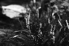 日差しの中の花