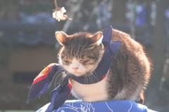 湯島天神にいた猫 いねむり(去年のものです)