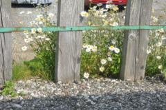 小屋の畑駅の花