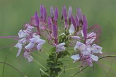 工事現場に咲く花