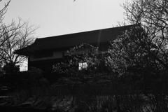 庄屋様の門と梅