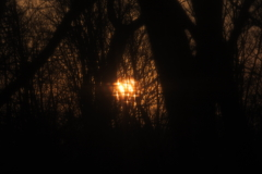 きらめく朝陽