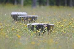 花に埋もれたベンチ