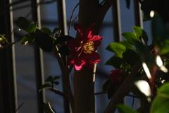 西日に咲く花