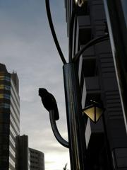 フクロウのいる街Ⅱ