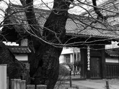 長野県上田高等学校に残る門