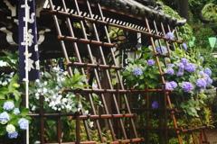 白山神社 紫陽花祭り~手水舎
