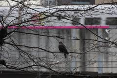 鳥と新幹線