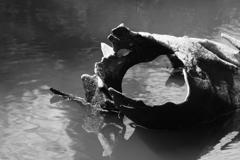 水中の老木2