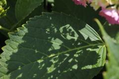 葉に落ちる影